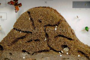 Como eliminar as formigas da sua casa