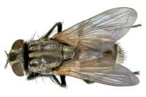 Seis dicas para eliminar os mosquitos da sua moradia